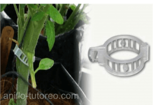 clip para tutuoreo